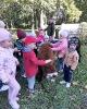 Alpaki w przedszkolu-2
