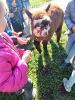 Alpaki w przedszkolu-4