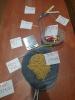 Układ pokarmowy na zdjęciach klas 4